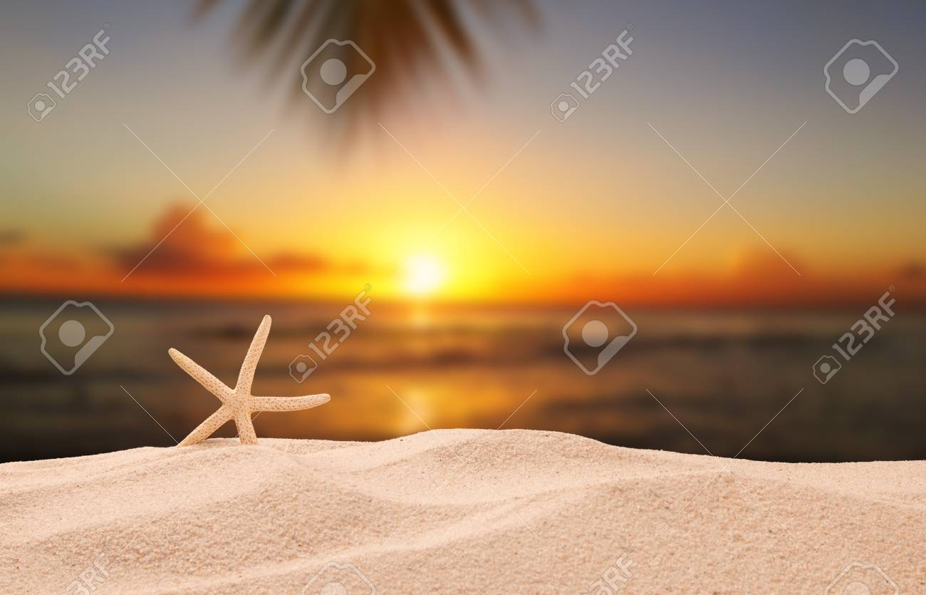 Shells on sandy beach with tropical beach background, sunset