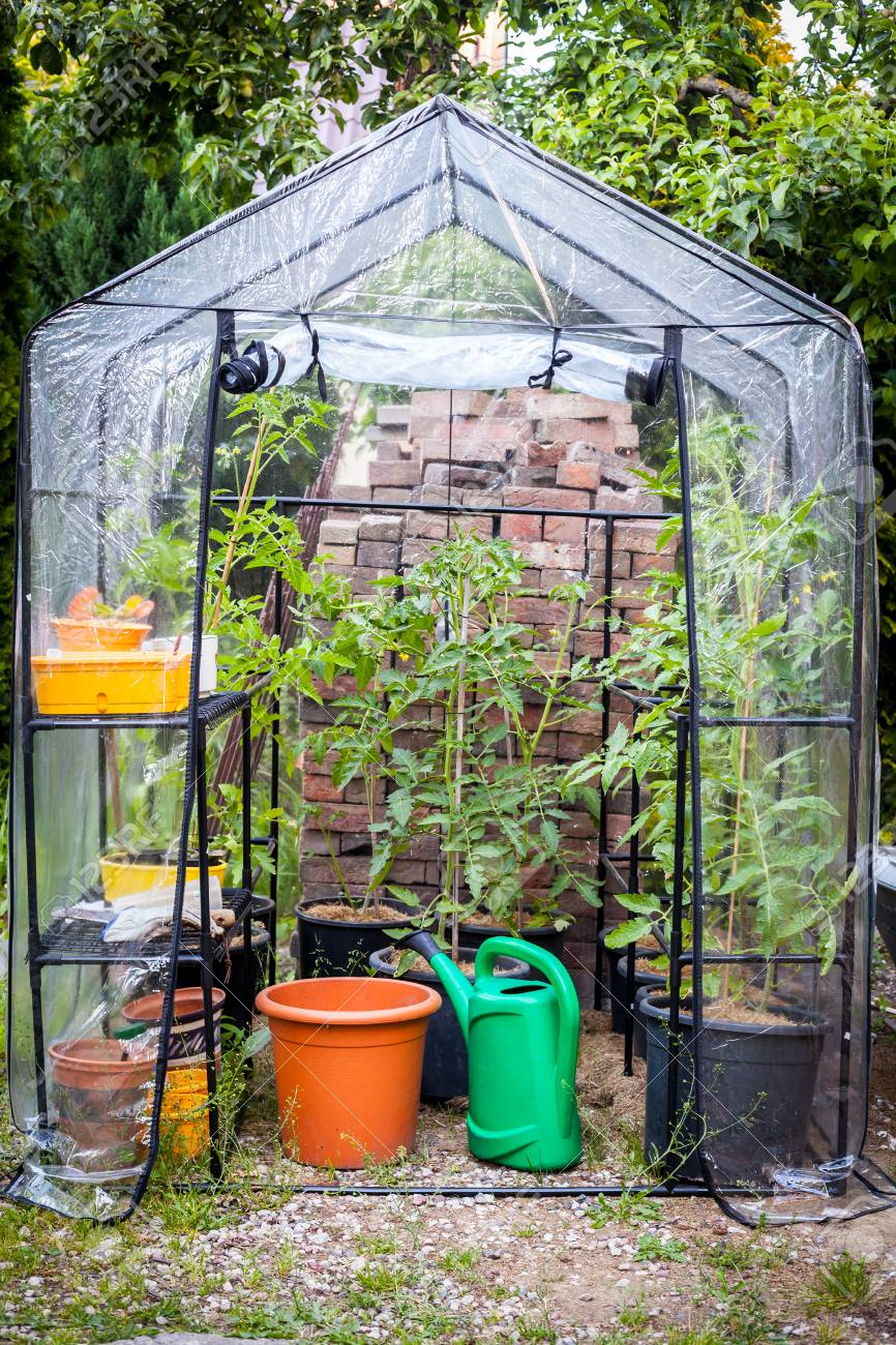 Brilliant Small Greenhouse With Young Tomato Plants Home Interior And Landscaping Oversignezvosmurscom