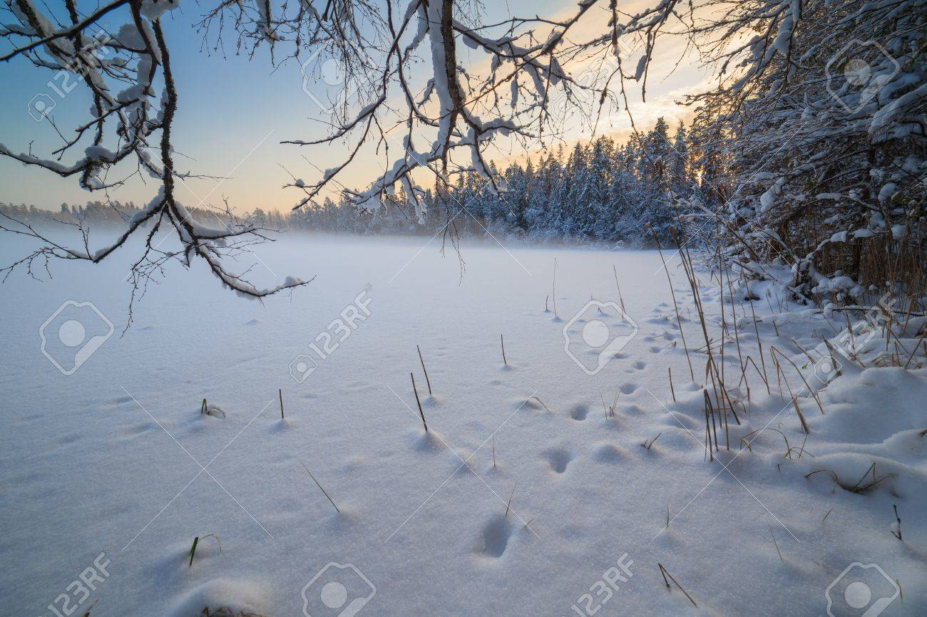 The frozen winter lake in wood under snow Stock Photo - 16138841