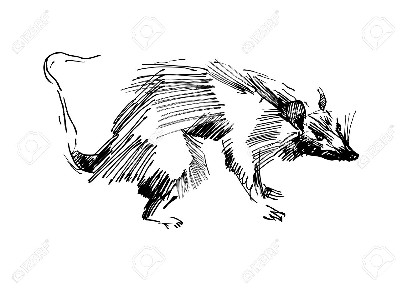 Line Drawing Rat : Rat hand drawing black and white sketch royalty free cliparts