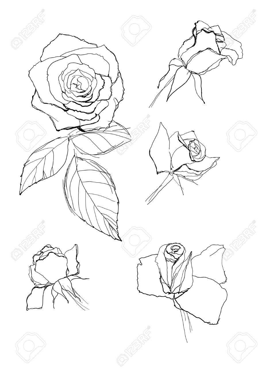 dibujo de rosas pluma colección ilustraciones vectoriales clip art