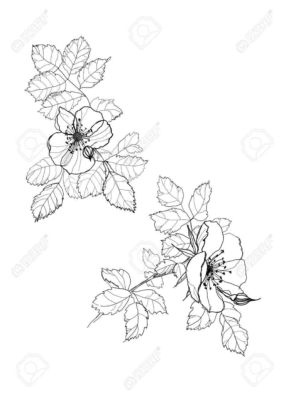Chien Fleurs Rose Dessin à La Plume Sur Fond Blanc