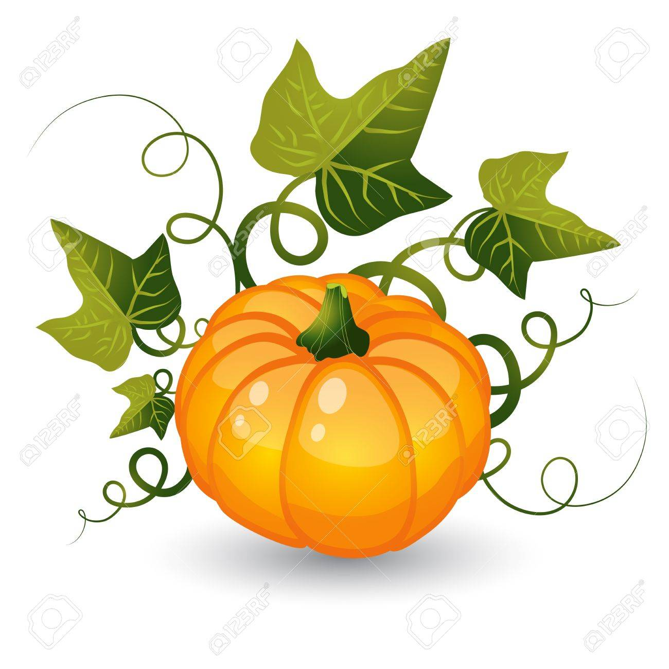 Pumpkin with leaves on a white background Stock Vector - 15285764