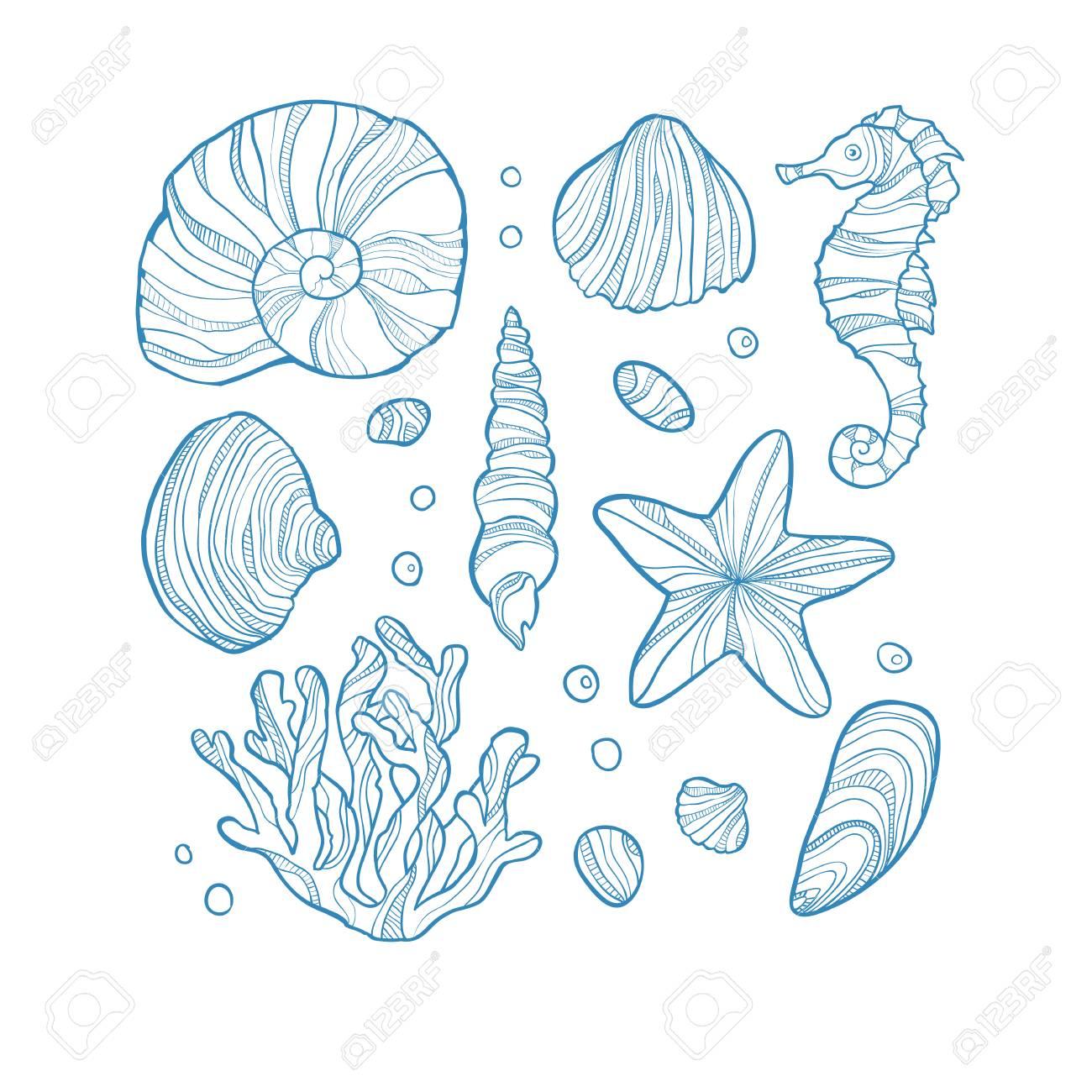 Stellen Sie Muscheln Korallen Seepferdchen Seesterne Und Felsen