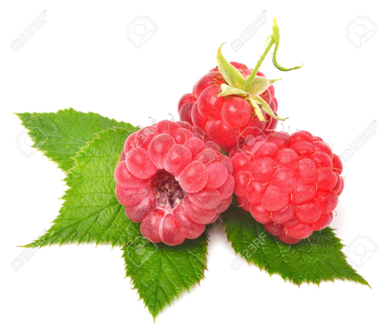Rasberry with leaves isolated on white - 25026752