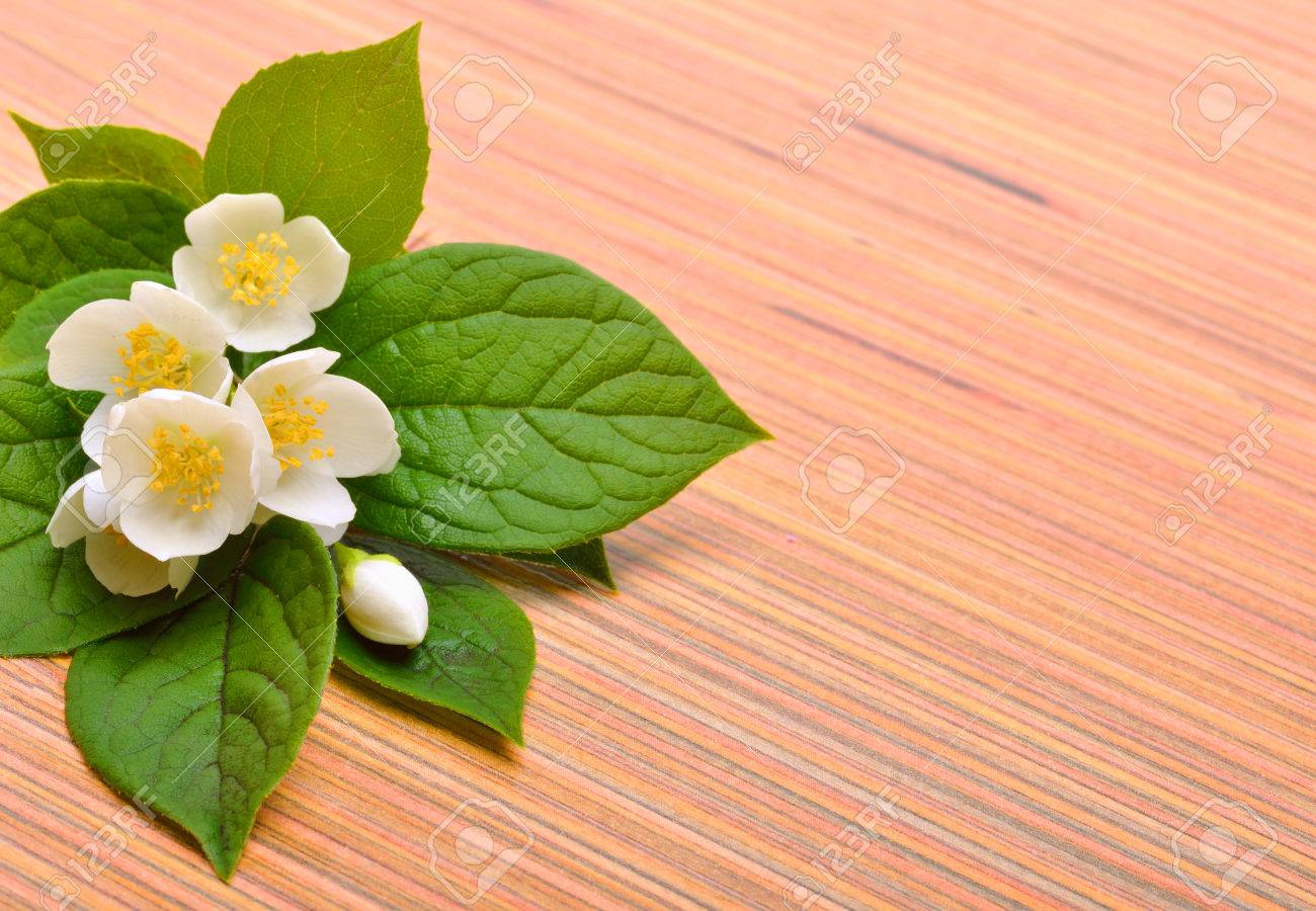 Jasmine Flower Bouquet On Wooden Background Stock Photo, Picture And ...