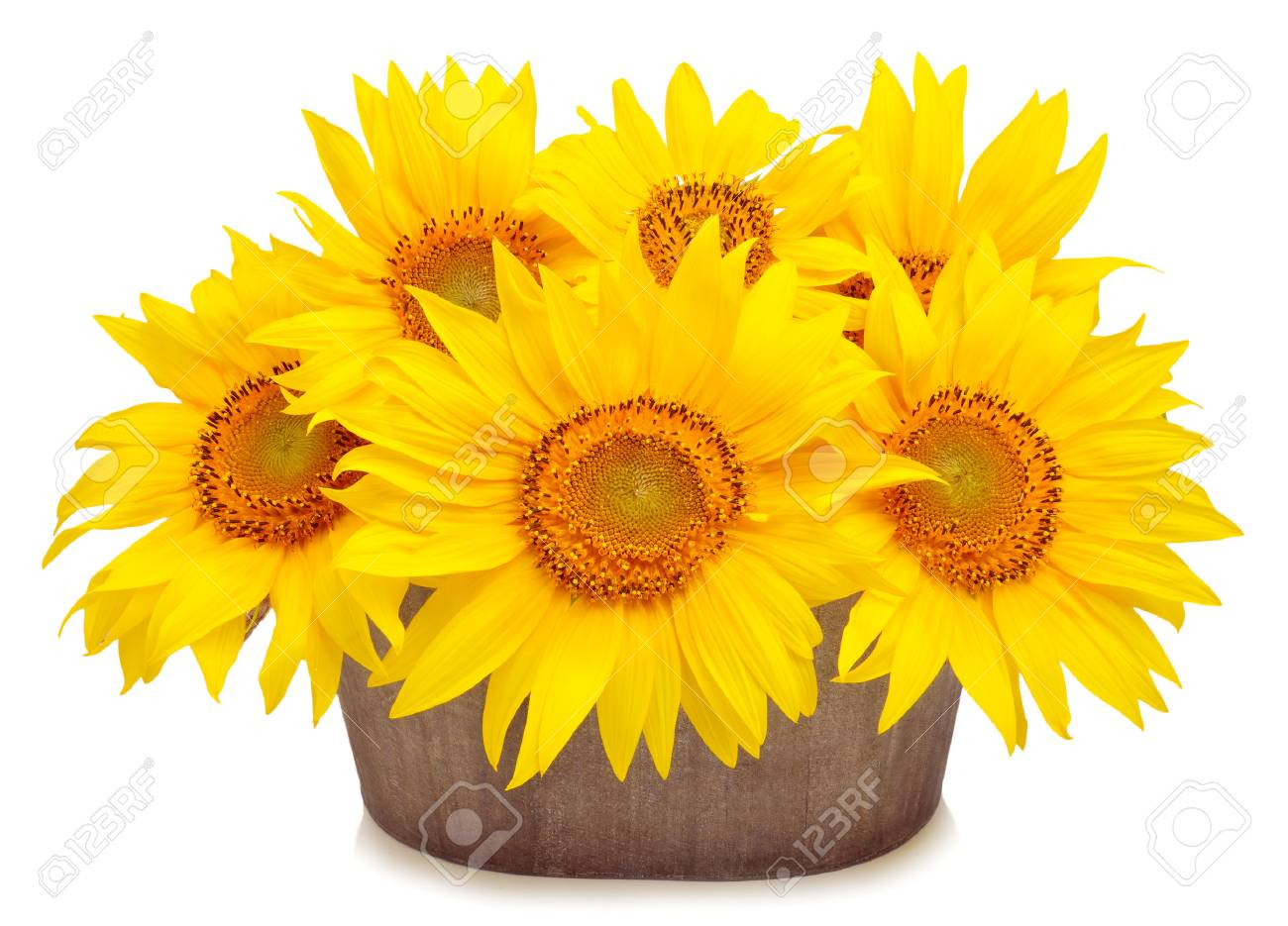 Bouquet of beautiful sunflowers in pod isolated on white background - 46192820