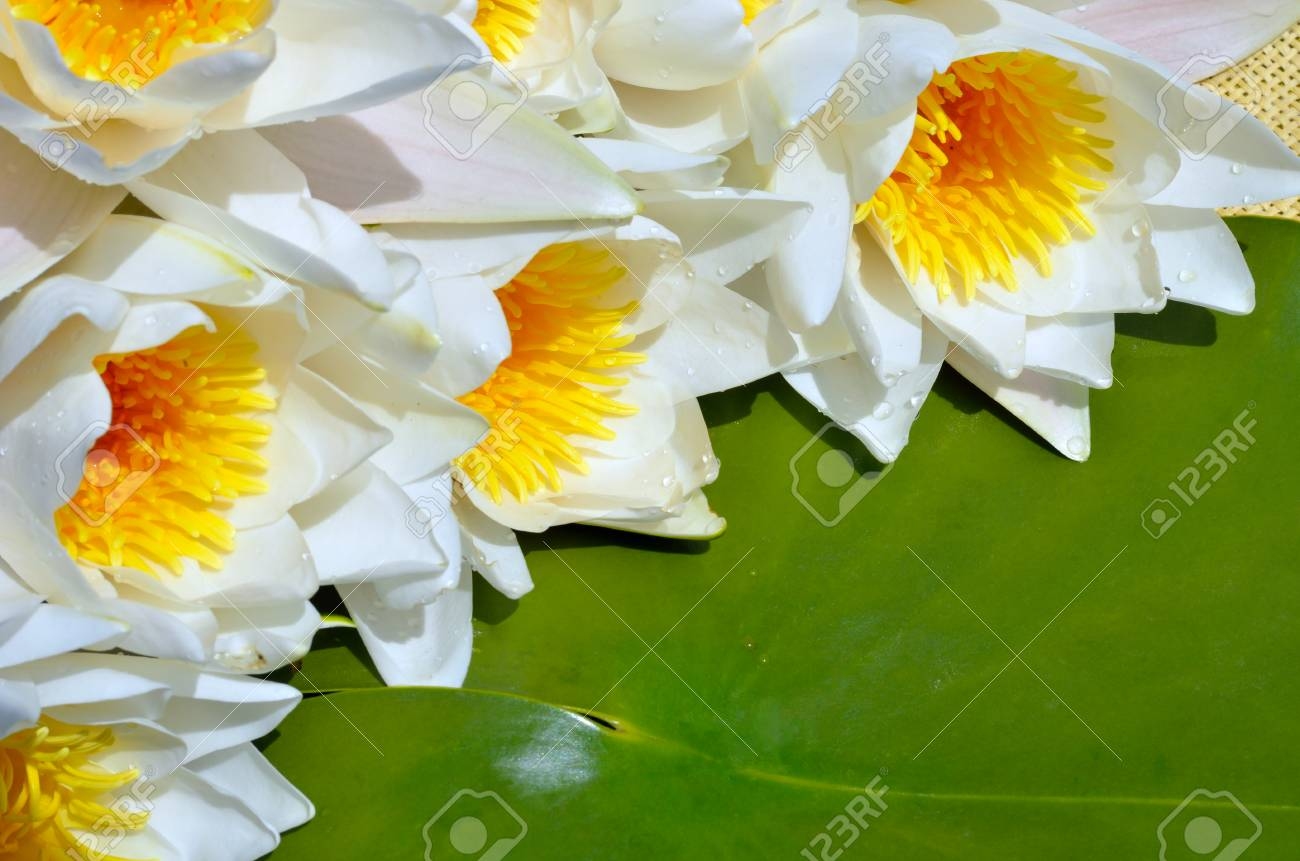 Bouquet water lily on a green leaf background. - 60807701