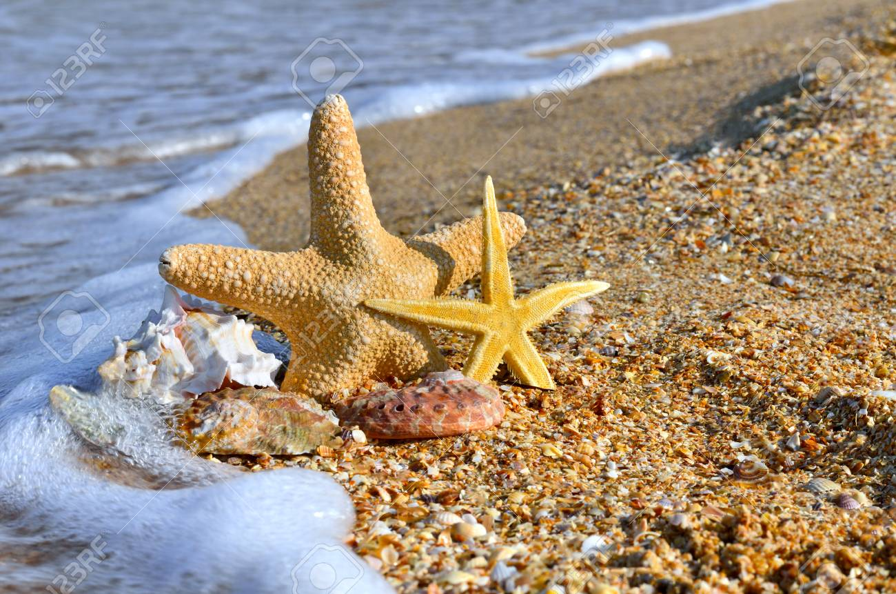 Sea shells and starfish with sand as background. - 68693408