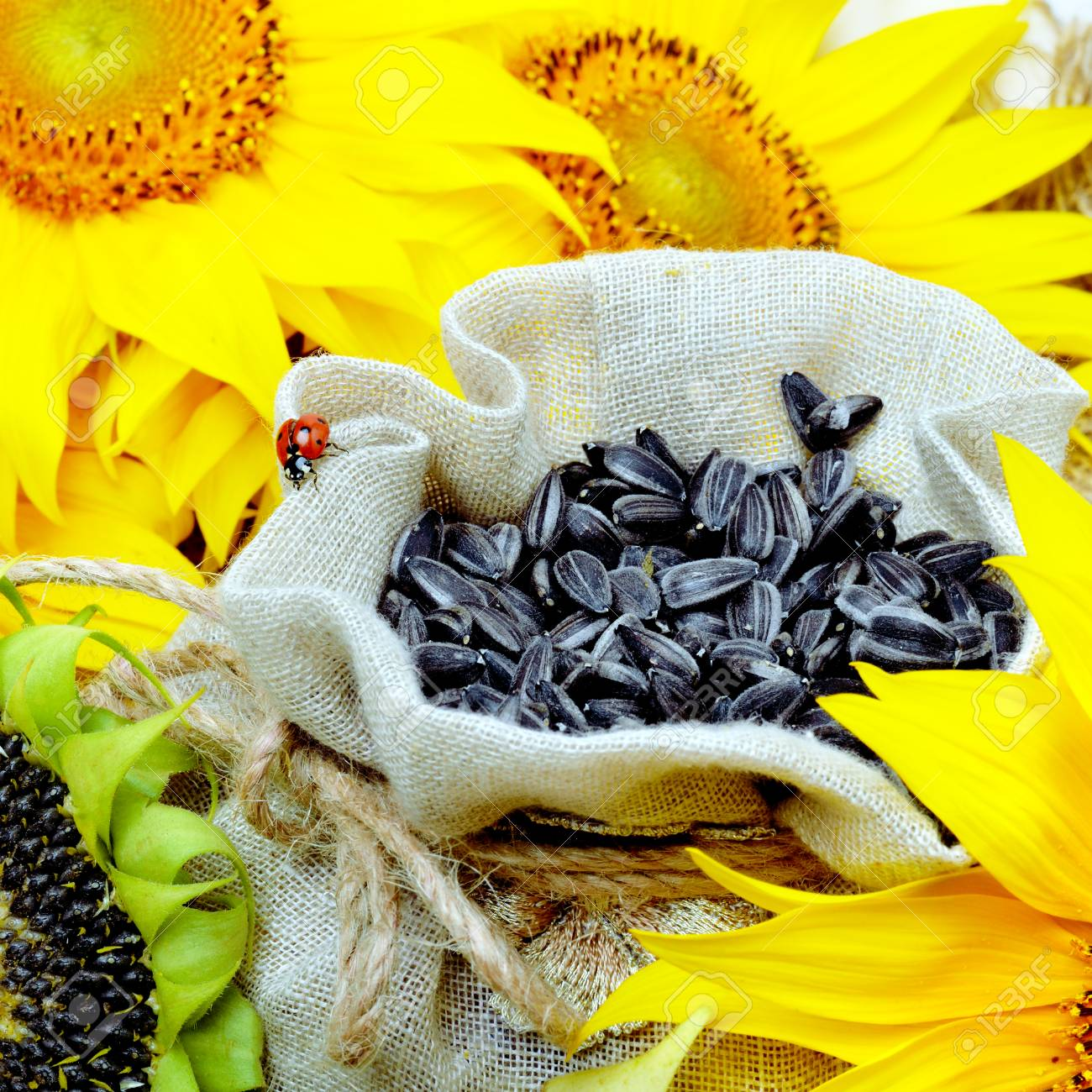 Sunflower and sunflower seeds in sackcloth bag, selective focus. - 68693463