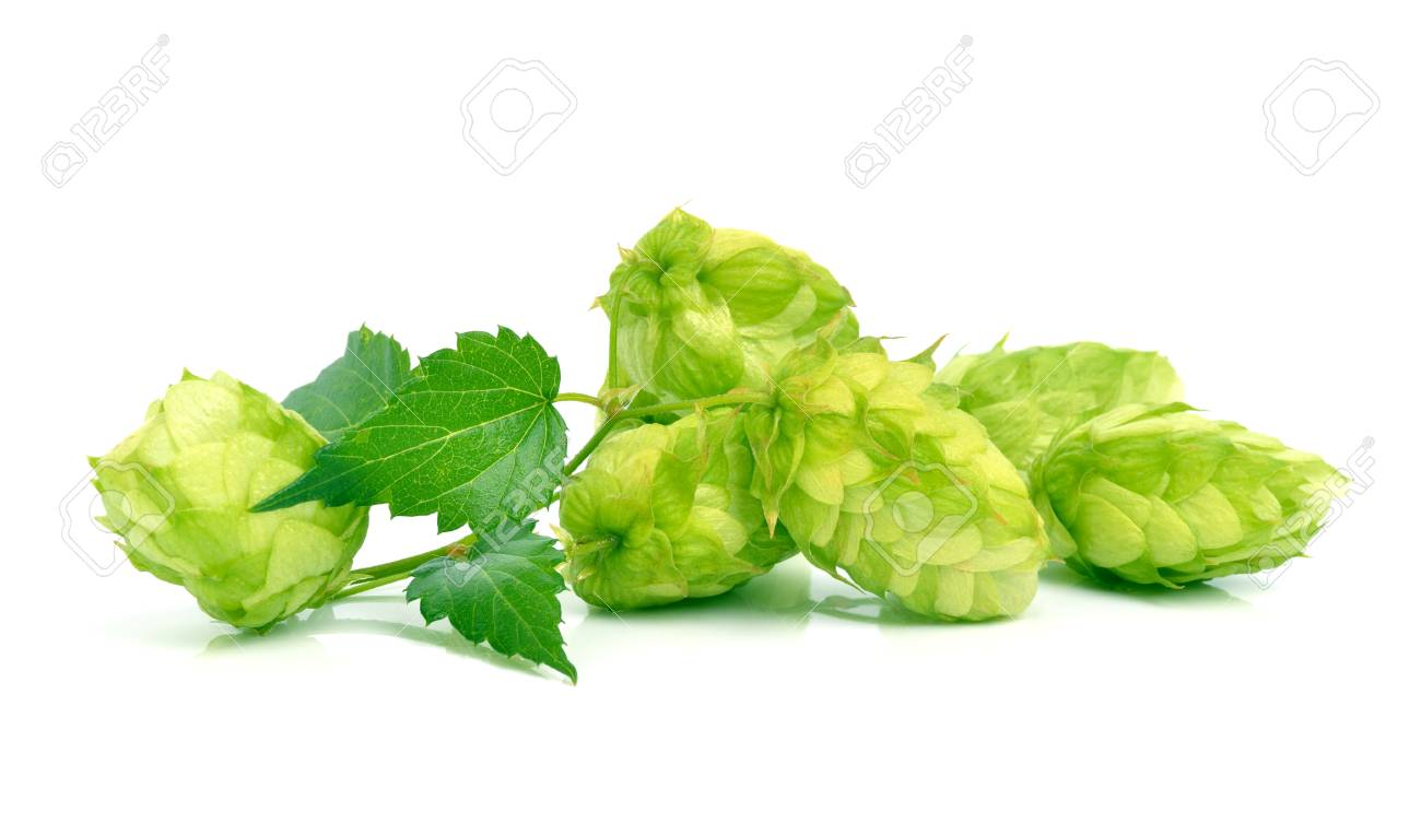 Hop isolated on white - 72068017
