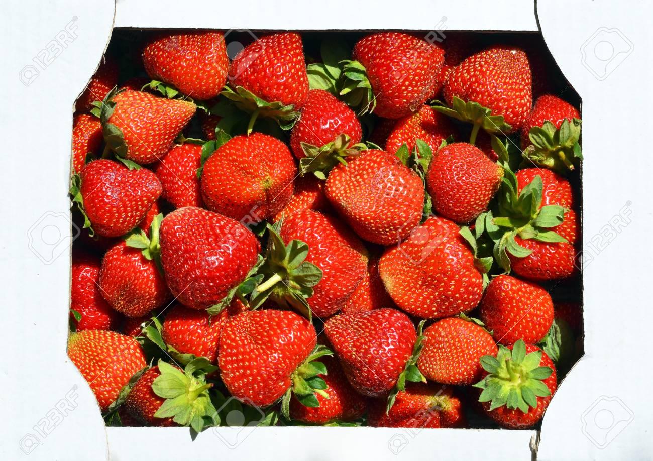 Strawberries in a cardboard box. - 76563662