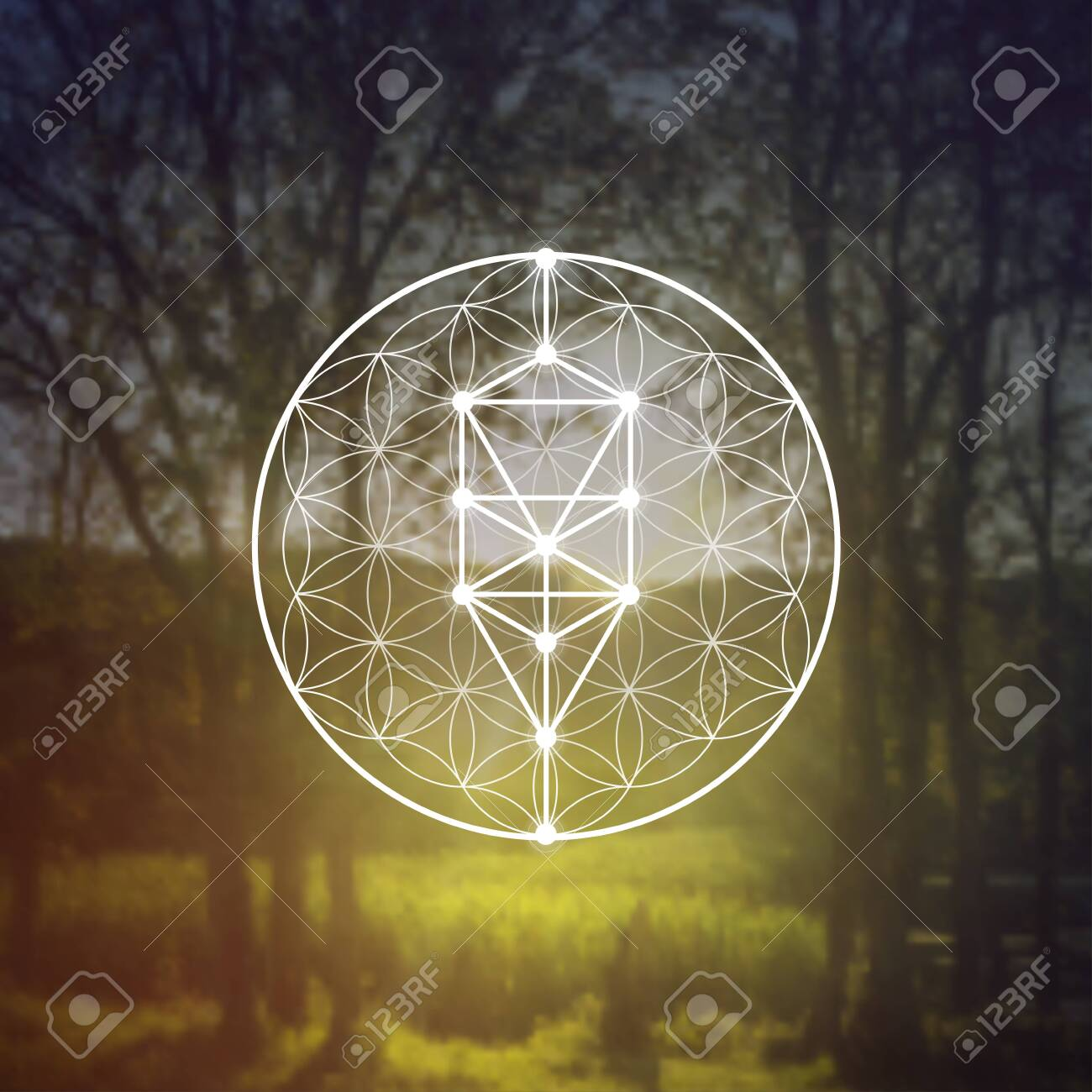 Flower of life sacred geometry illustration with intelocking circles and light dots in front of photographic background. Hipster tree of life sci fi art - 153118220