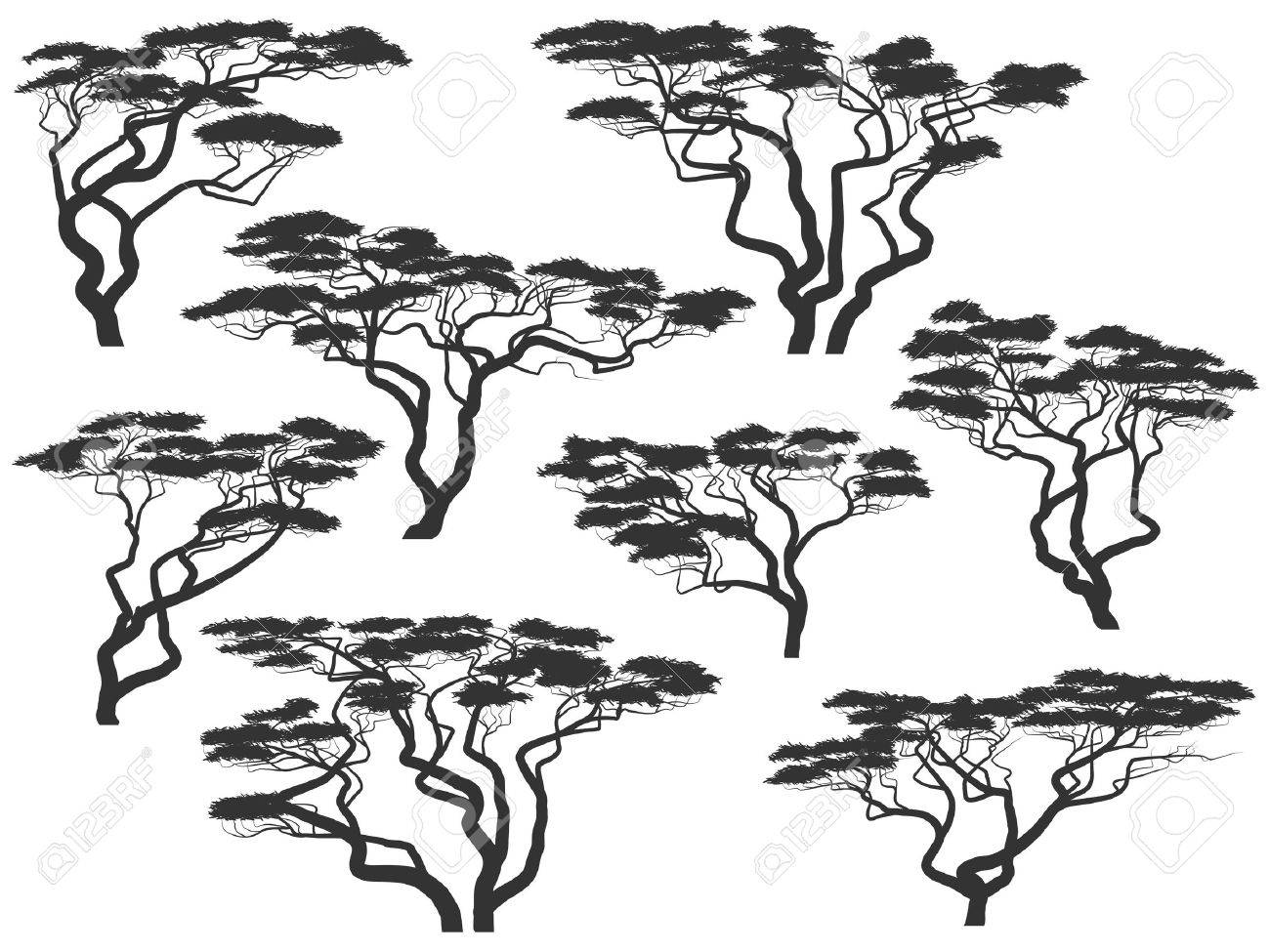 Set of vector silhouettes of African acacia trees isolated on white. Stock Vector - 16006798