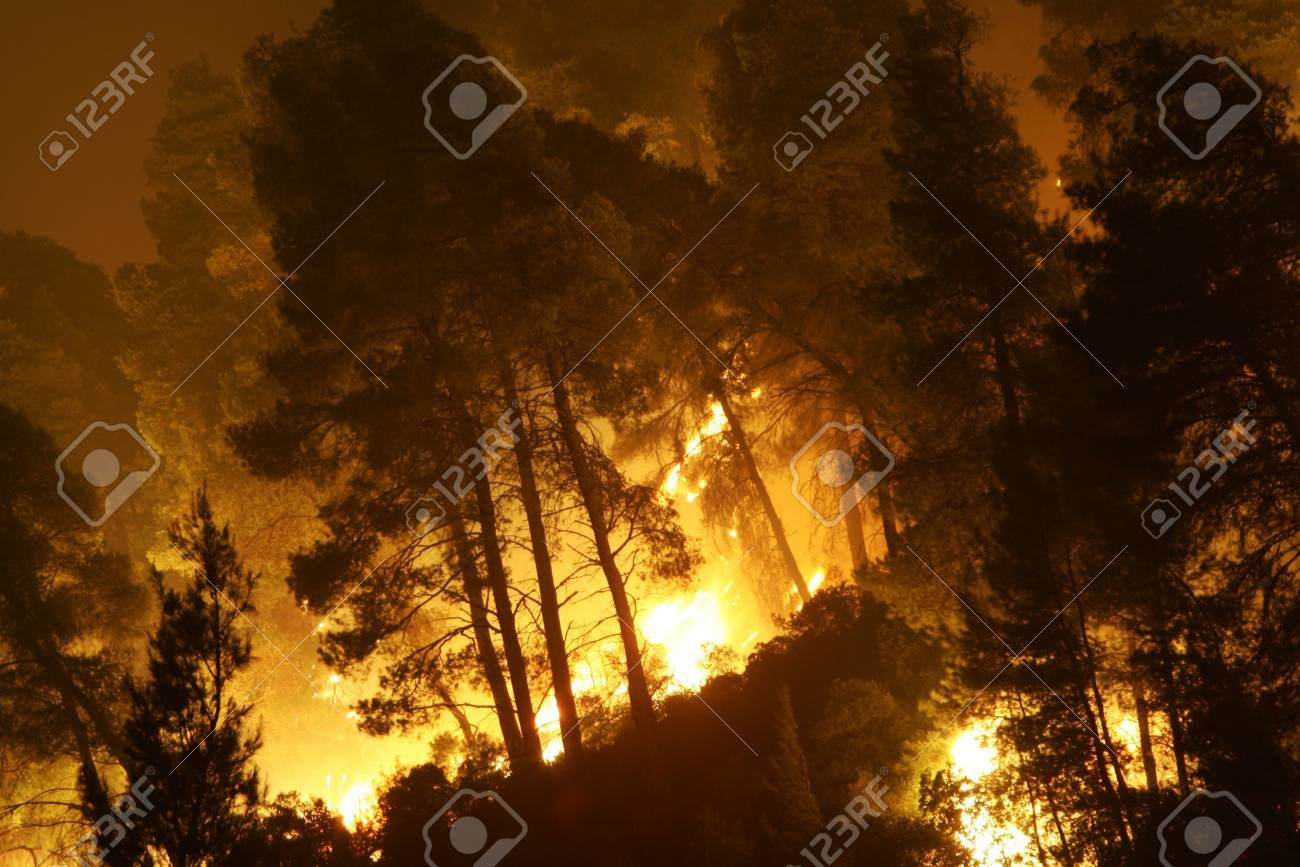 HALKIDIKI, GREECE - AUGUST  23, 2006 : The View of wildfire of forest on August 23 , 2006 in Halkidiki, Greece. Stock Photo - 16205886