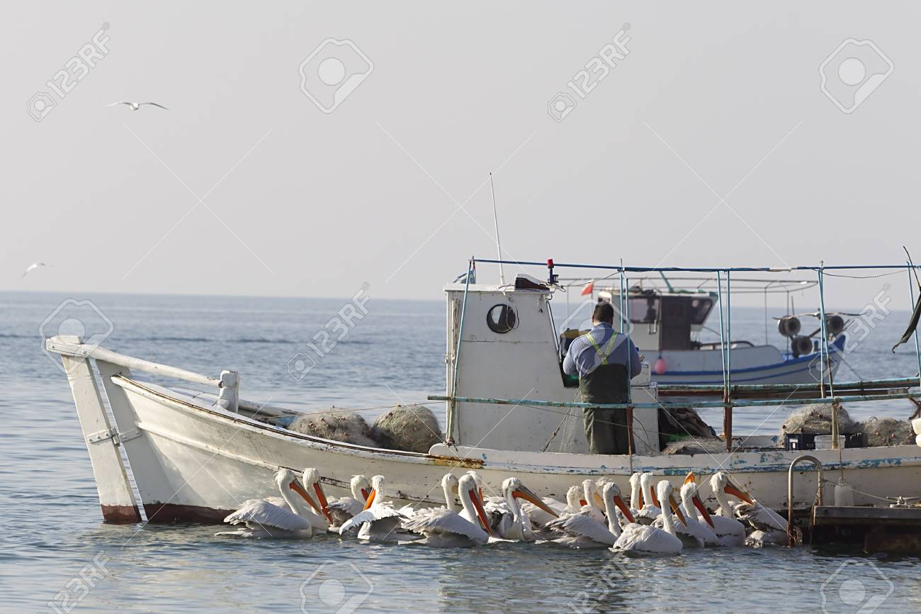 Fishing Boat and the fisherman surrounded by pelicans, in Greece. Stock Photo - 28398680