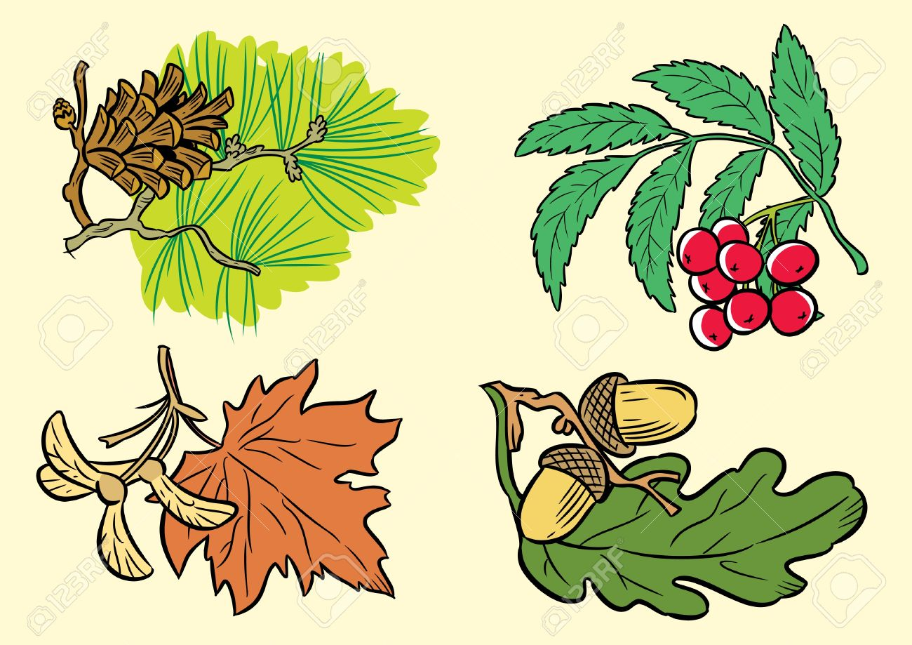 the illustration shows a few types of leaves of different species