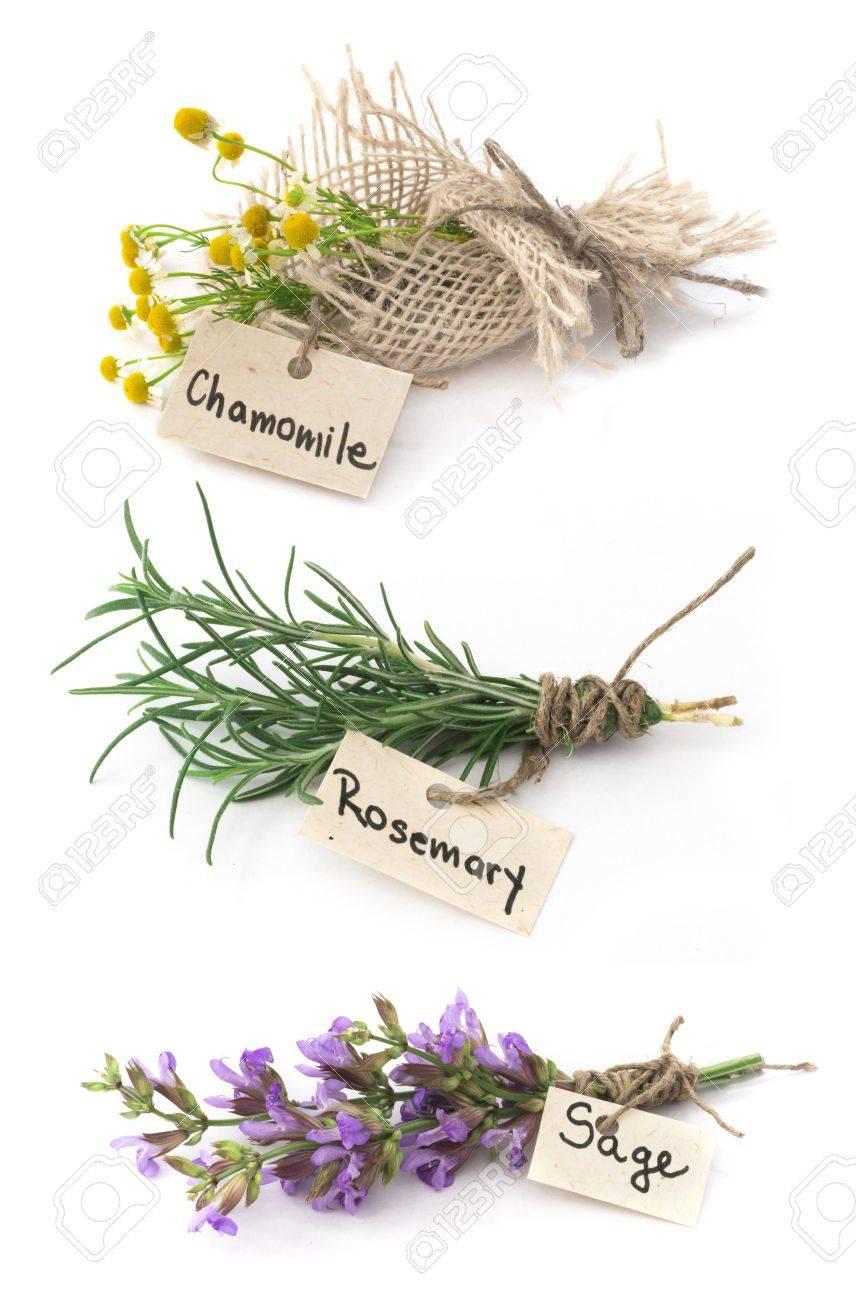chamomile, rosemary and sage Stock Photo - 19746699
