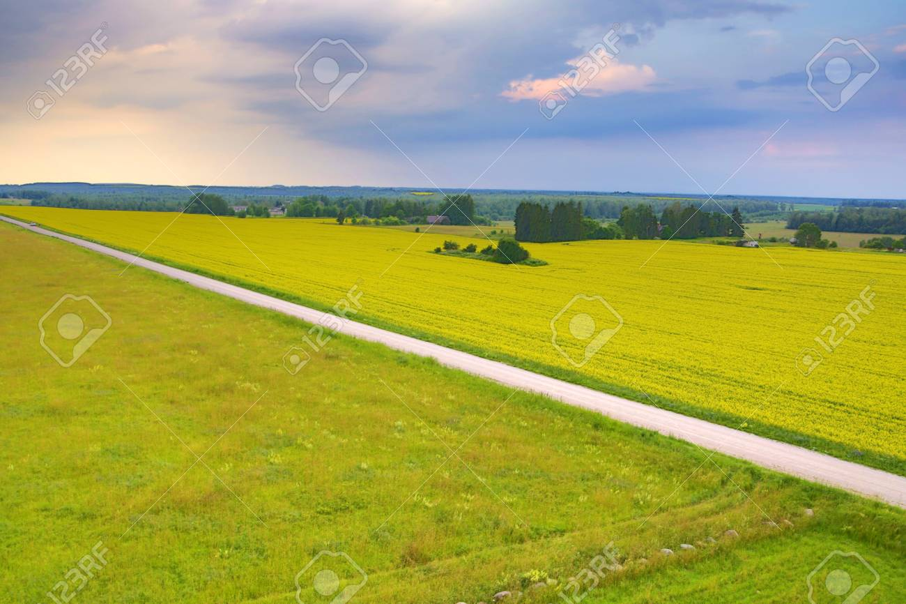 Long road over green field on windy weather Stock Photo - 14471611