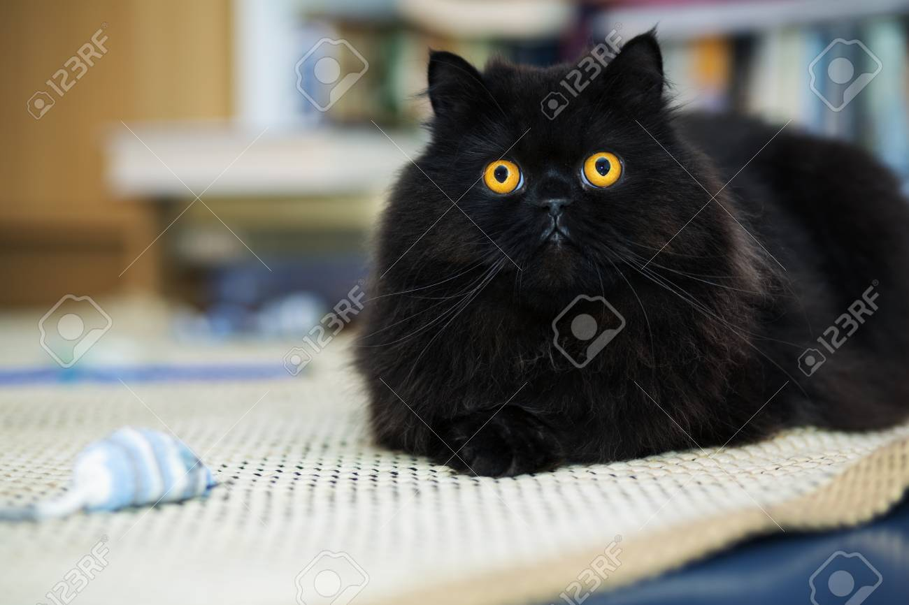 Black male cat looking curiously at photo camera Stock Photo - 21926909