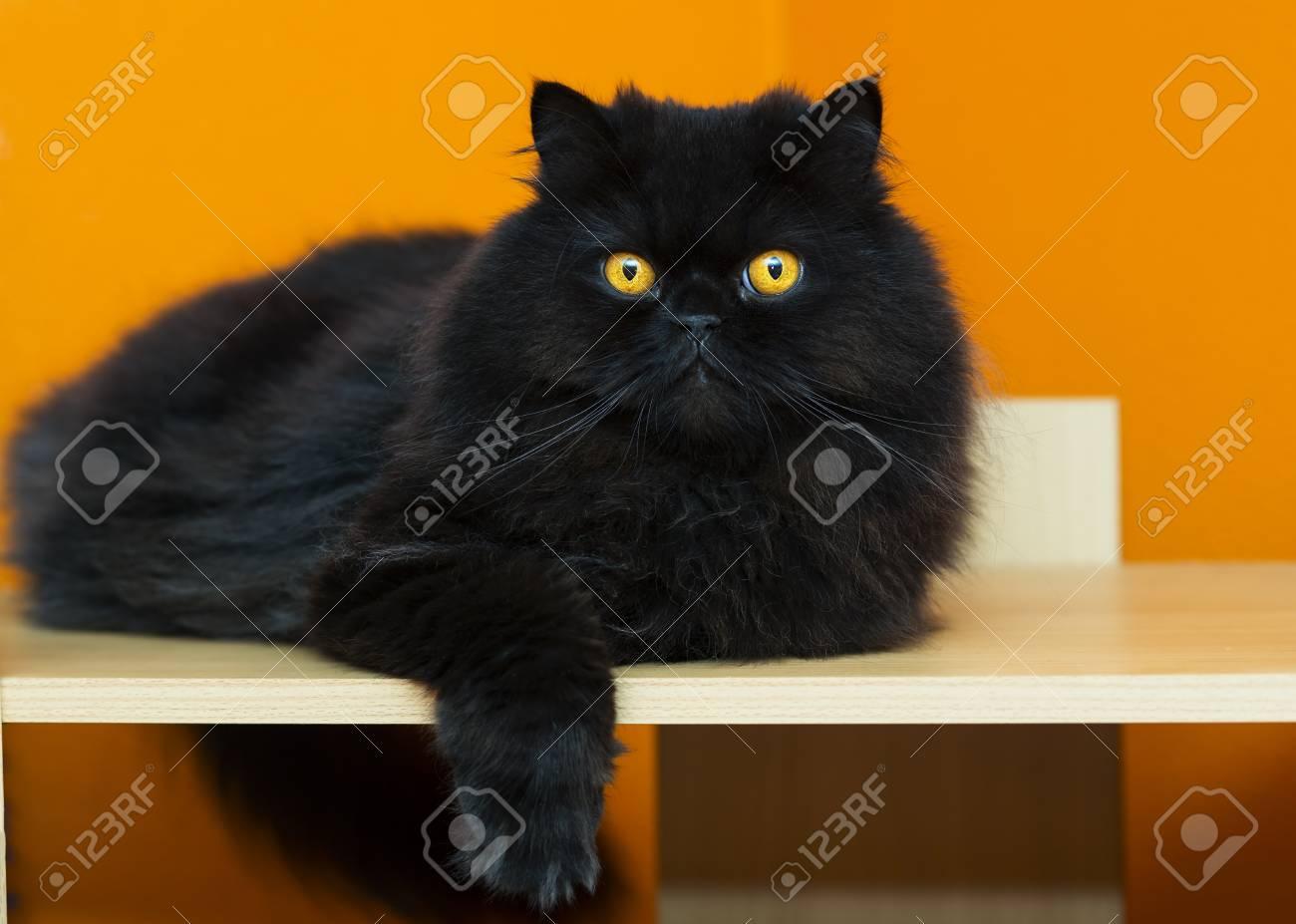 Black male cat taking rest at orange background Stock Photo - 21926914