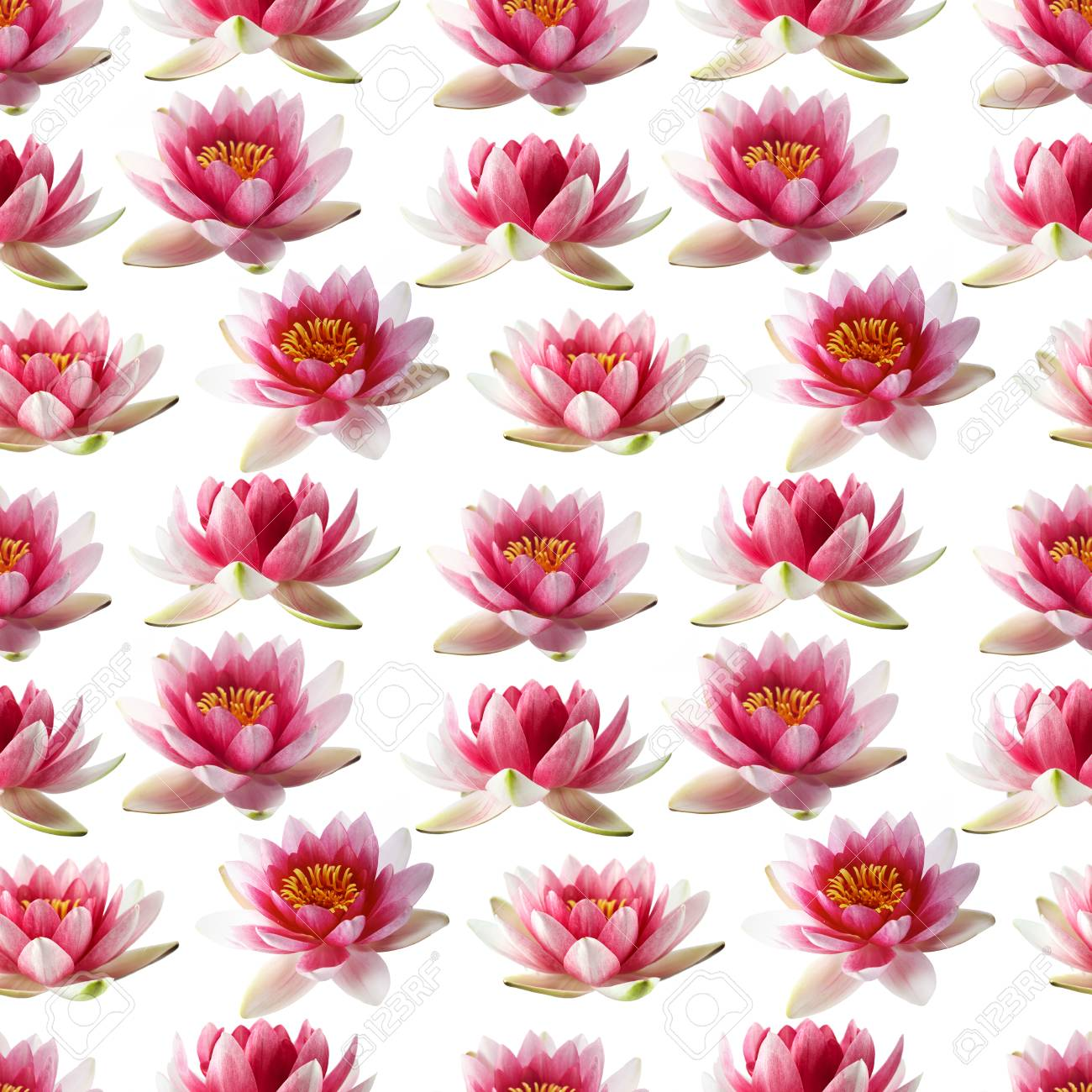 Lotus flowers seamless pattern isolated stock photo picture and lotus flowers seamless pattern isolated stock photo 44049832 izmirmasajfo