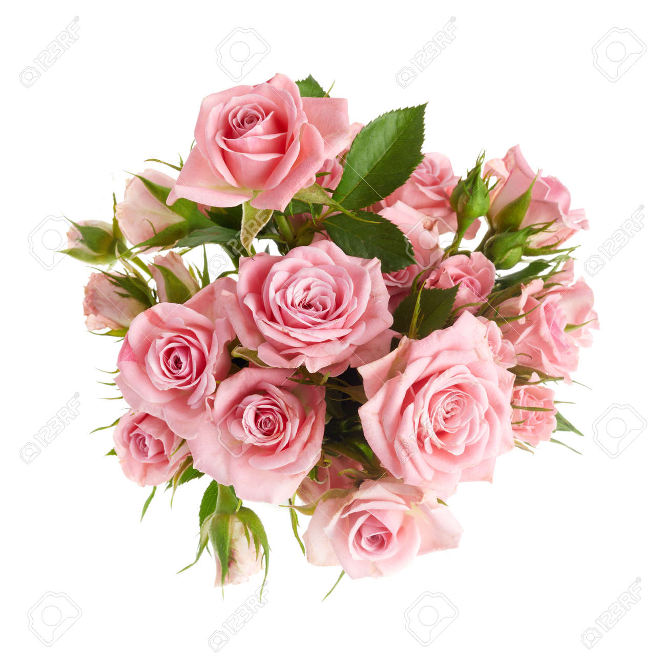 Beautiful pink rose flowers arrangement isolated on white background - 168704938