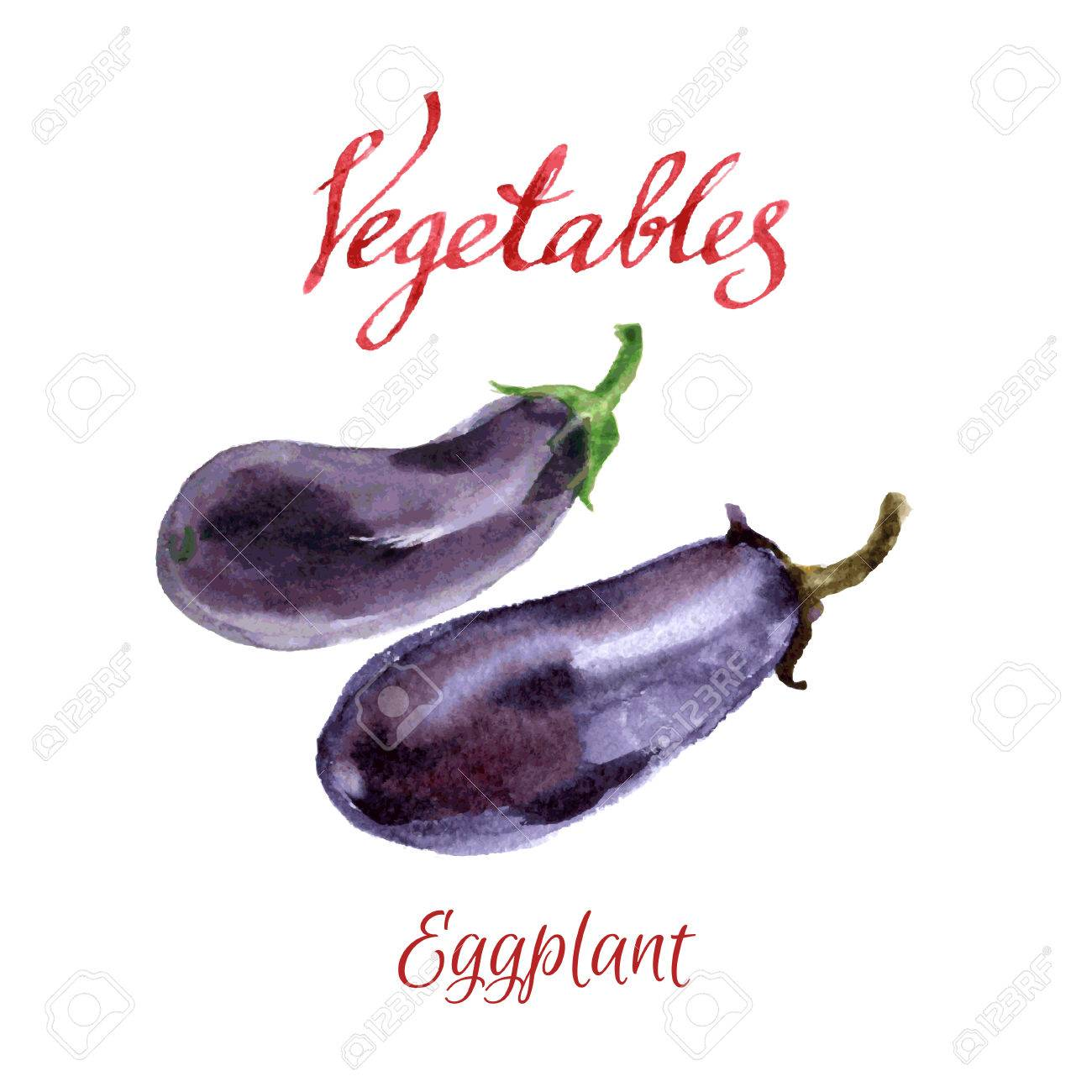 Watercolor Sketch. Vegetables From A Kitchen Garden. Eggplant ...