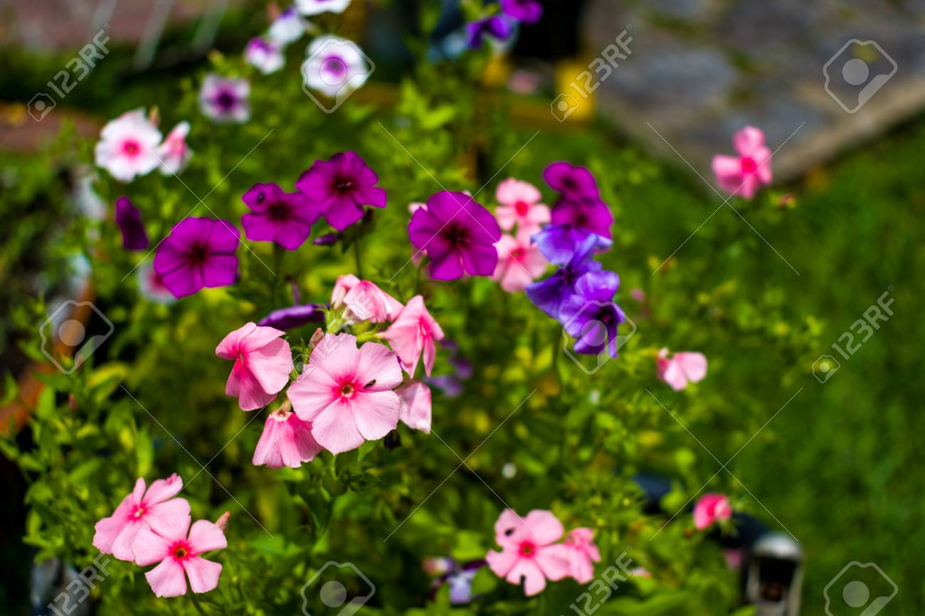 Beautiful Spring Flowers Wallpaper Stock Photo Picture And Royalty