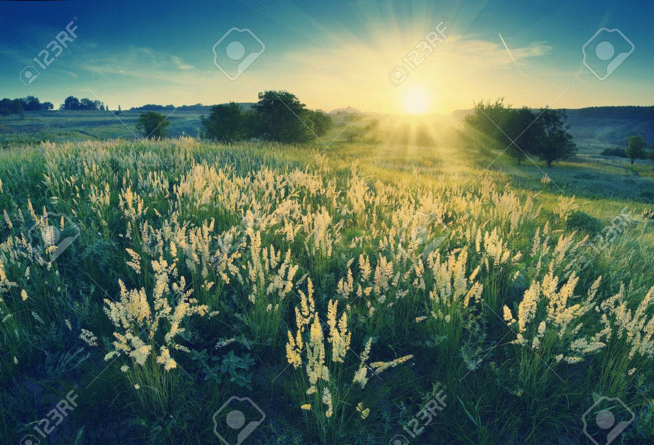 Vintage picture. Magic sunrise in the valley of high grass Stock Photo - 36262167