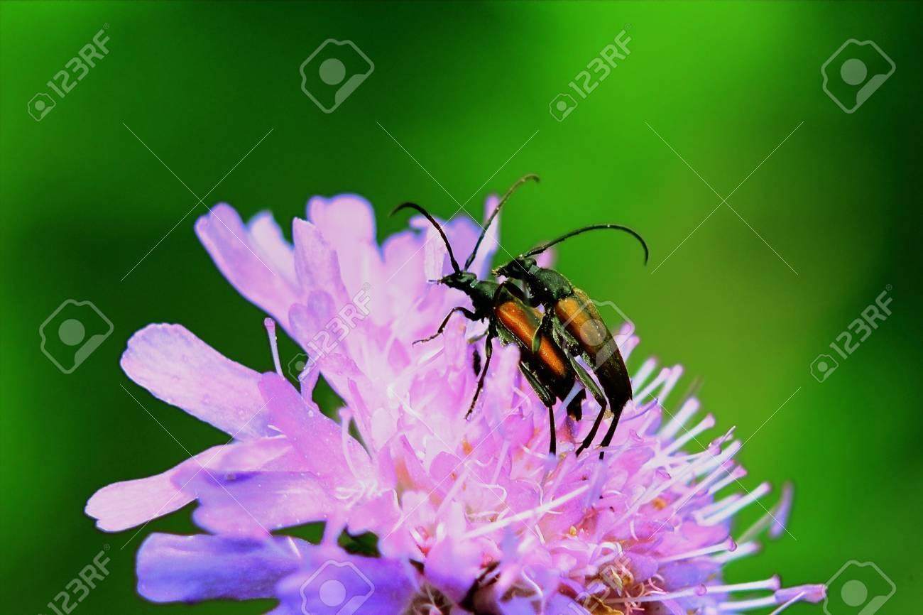 Asombroso Rosa Animales Uñas De Impresión Fotográfica Adorno - Ideas ...