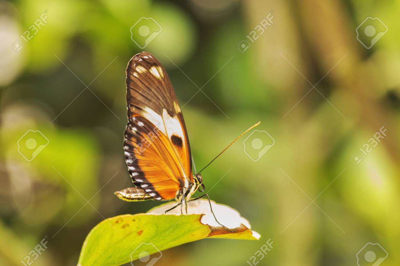 A single butterfly on a leaf ,out of focus background ,saturated colors ,selective focus , - 104635056