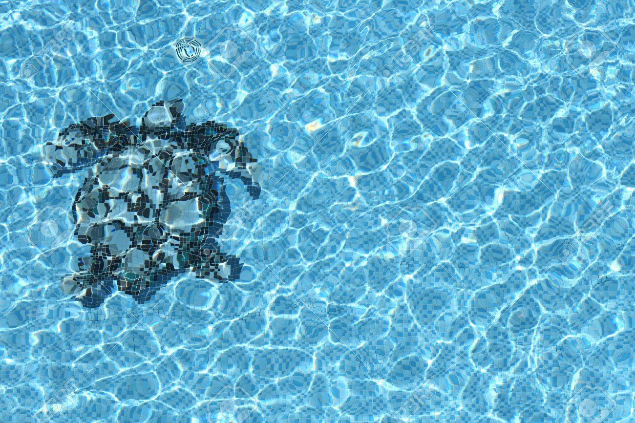 Refection of Blue water in Sea Turtle mosaic Swimming pool with..