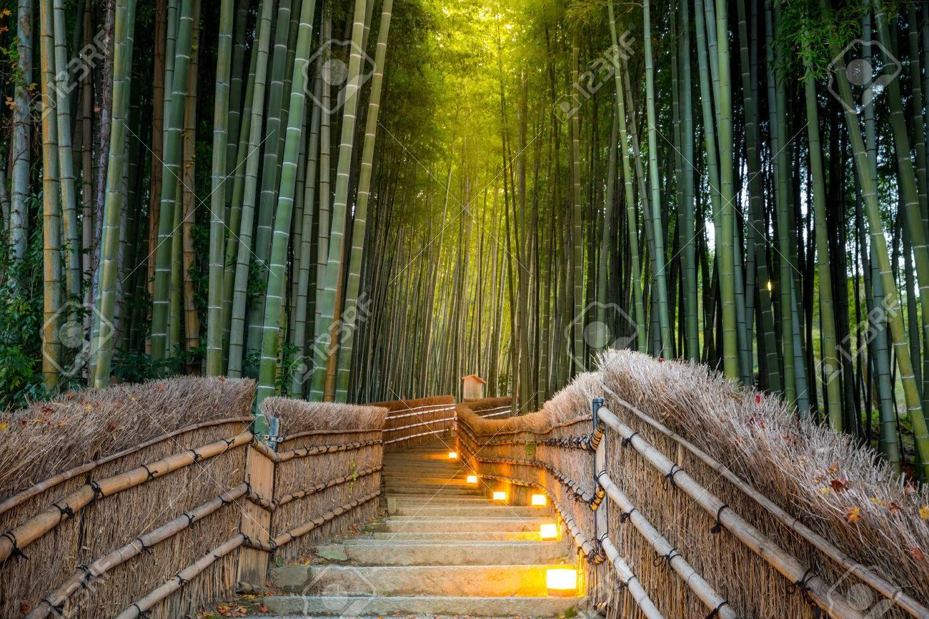 Arashiyama Bamboo Forest in Kyoto Japan - 54115086