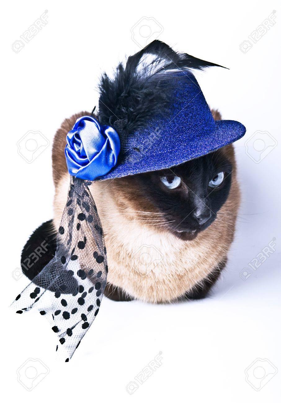 Animal Drôle Siamois Mignon Chat Hilare D'humour Isolé Sur Le Fond ...