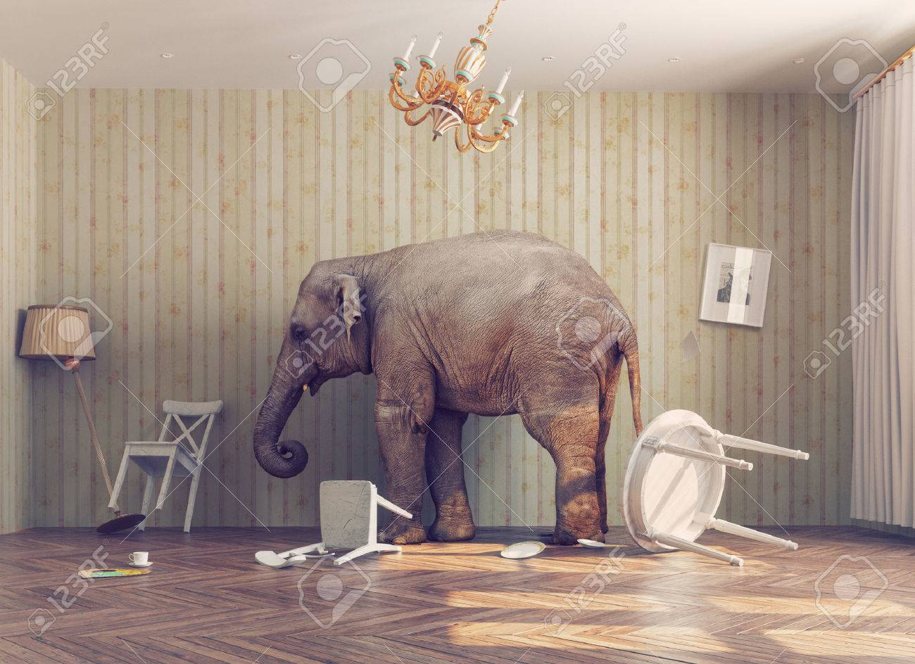 a elephant calm in a room. photo combinated concept Standard-Bild - 47971956