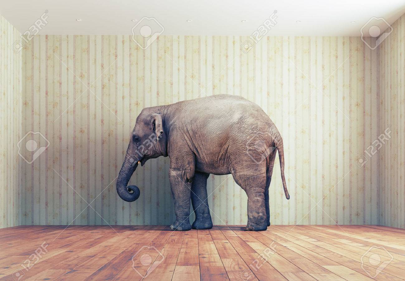 lone elephant in the room. Creative concept Standard-Bild - 47971964