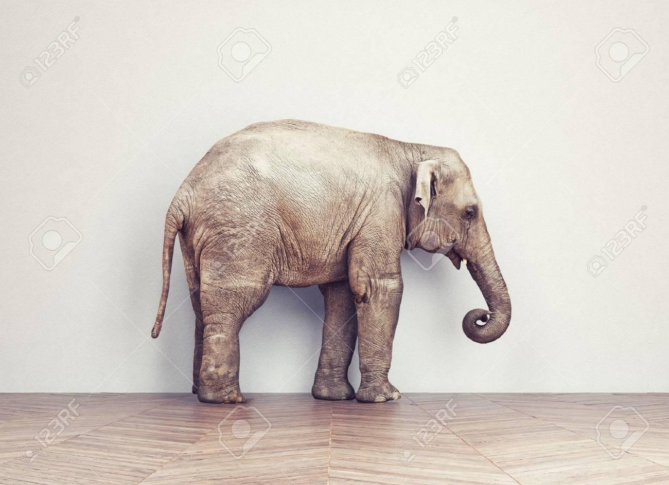 an elephant calm in the room near white wall. Creative concept Standard-Bild - 47972003