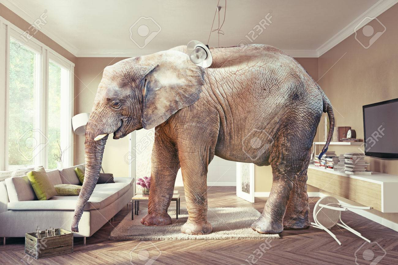 Big elephant and the case of beer  in the living room. 3d concept Standard-Bild - 56812219