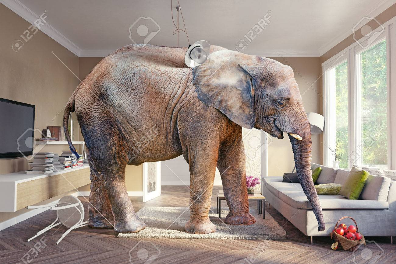 Big elephant and the basket of apples  in the living room. 3d concept Standard-Bild - 56812228