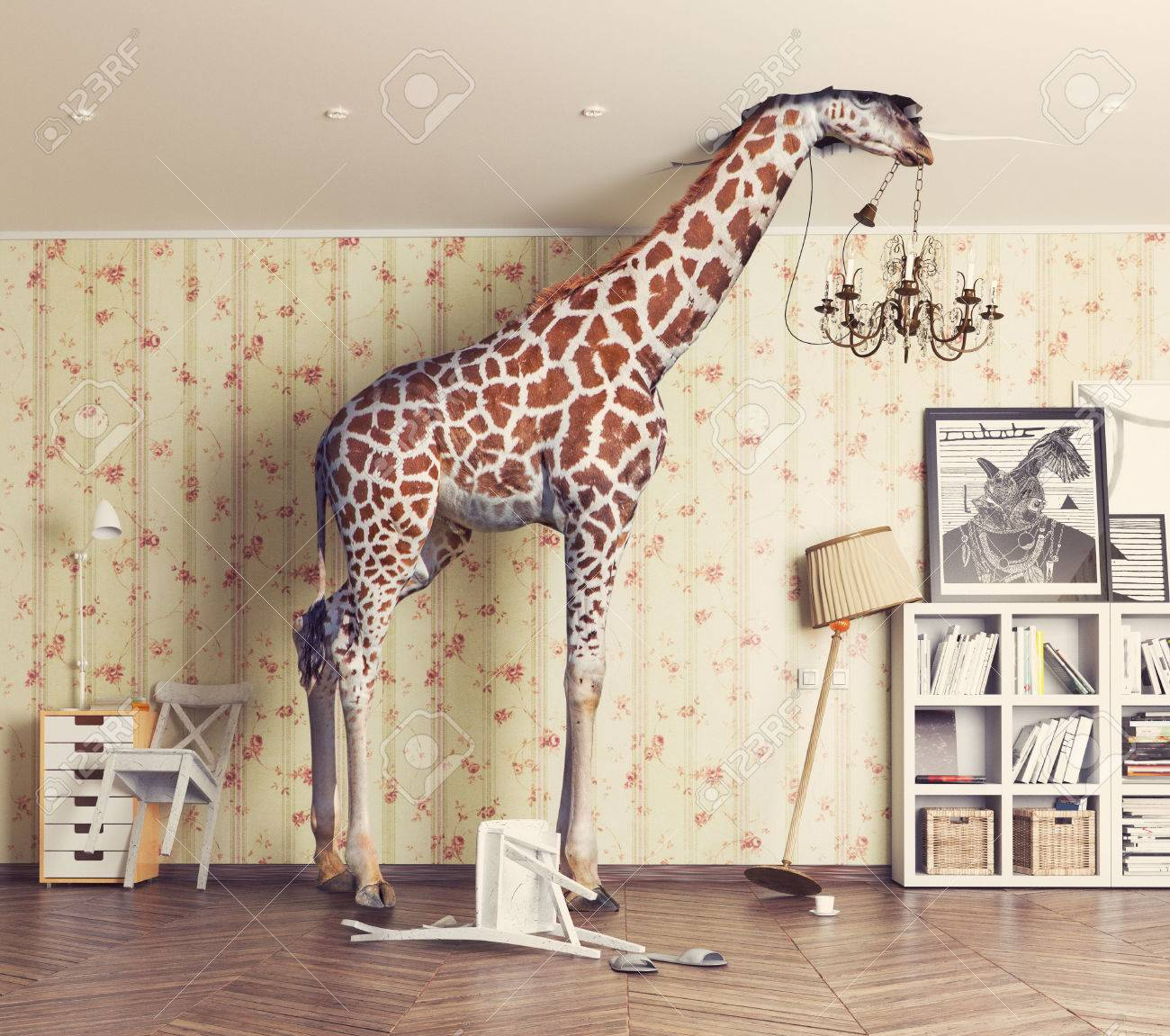 giraffe breaks the ceiling in the living room. Photography combination concept Standard-Bild - 64633956