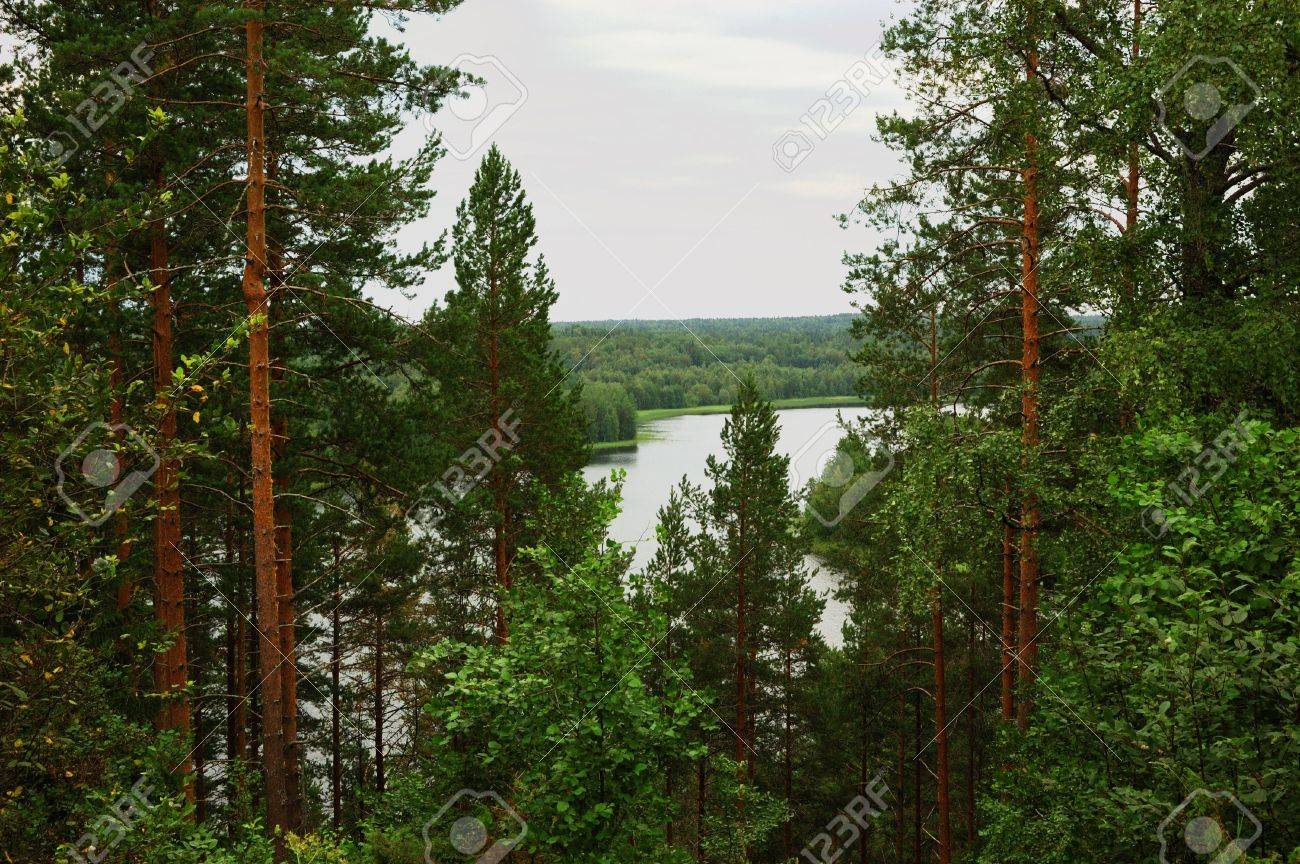 View to lake from hill through trees, north Russia Stock Photo - 2744460