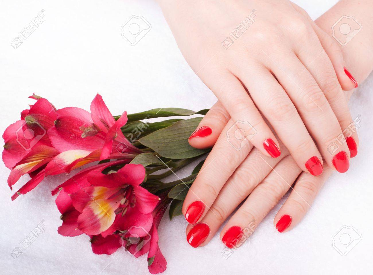 close-up of female hands with red nail polish on the background  flowers Stock Photo - 14600556