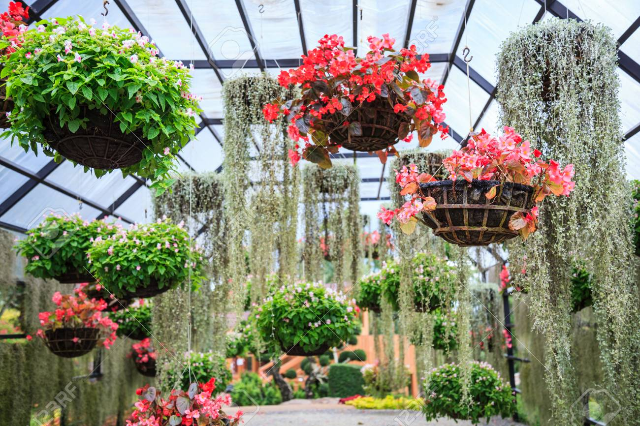 Stock Photo - varieties of blooming colorful plants and flowers in hanging flower pot in tropical ornamental indoor garden in natural park. & Varieties Of Blooming Colorful Plants And Flowers In Hanging.. Stock ...