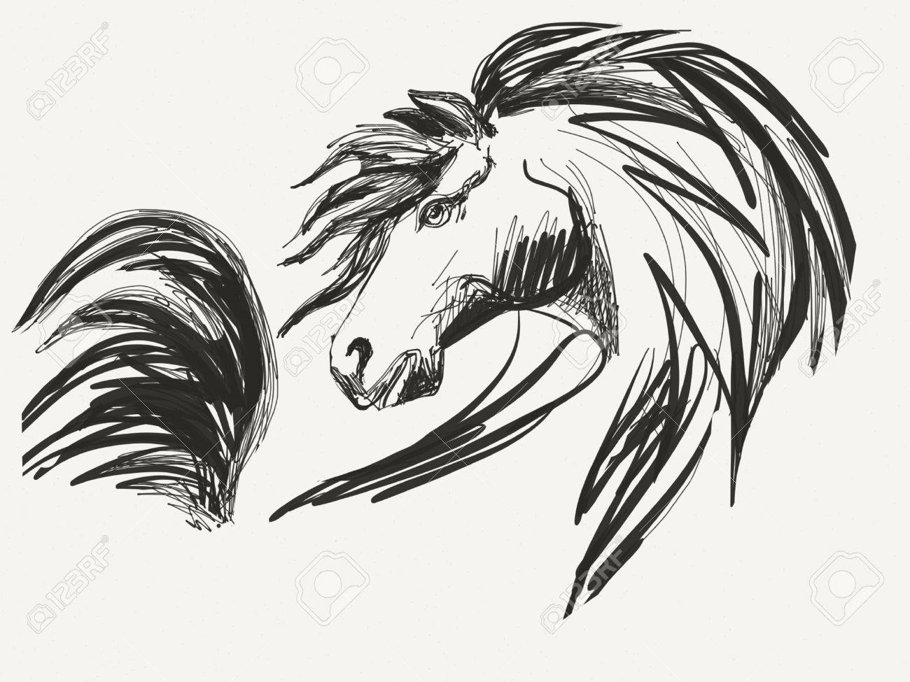 Horse Head Drawing Stock Photo Picture And Royalty Free Image Image 57313984