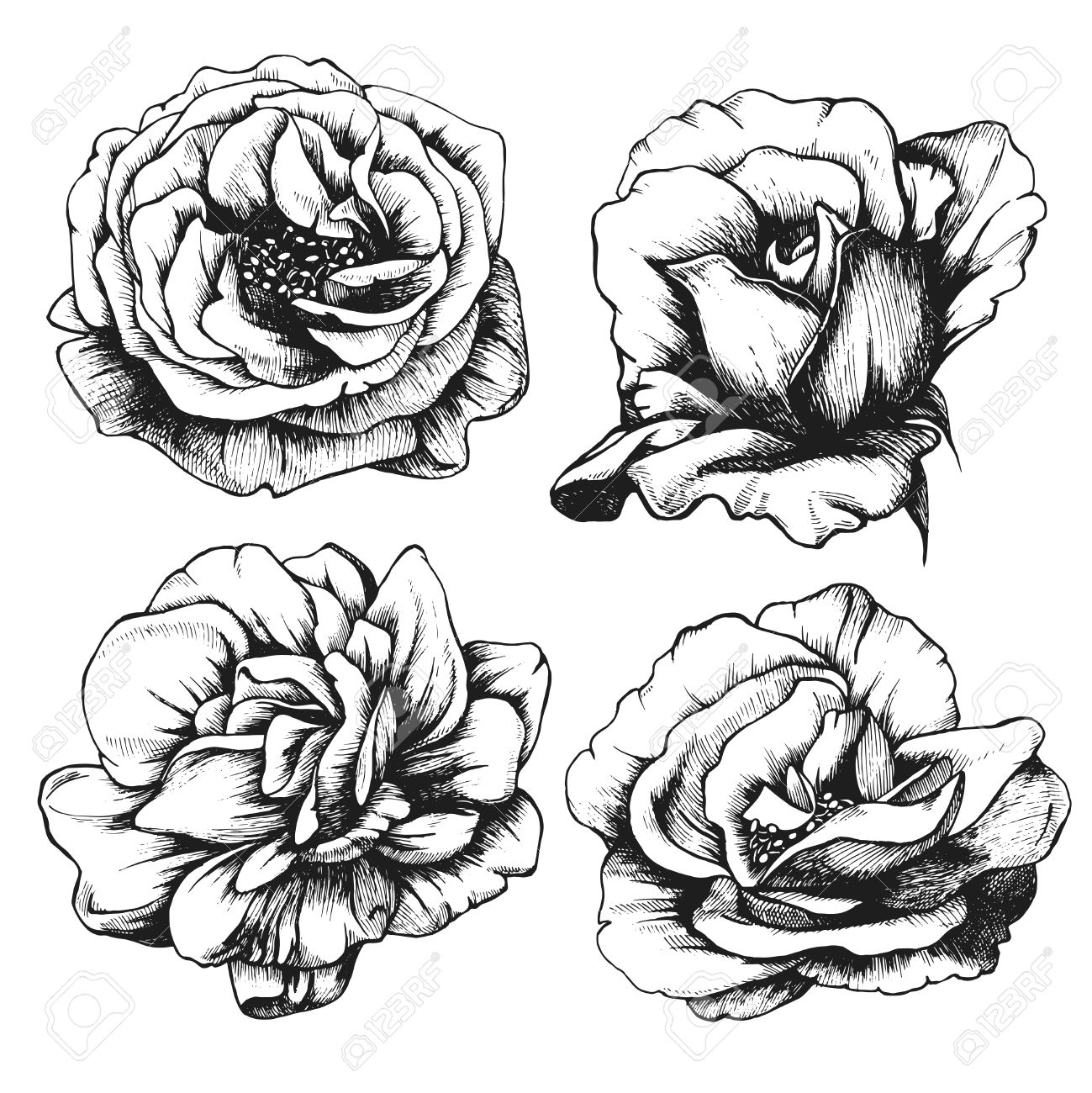 Set Of Highly Detailed Hand Drawn Roses Royalty Free Cliparts