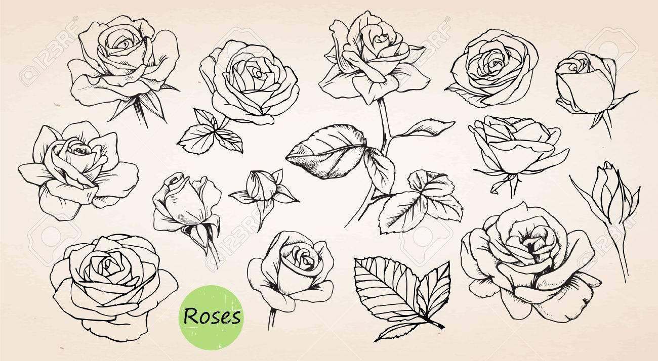 set of hand drawn roses vector royalty free cliparts vectors and