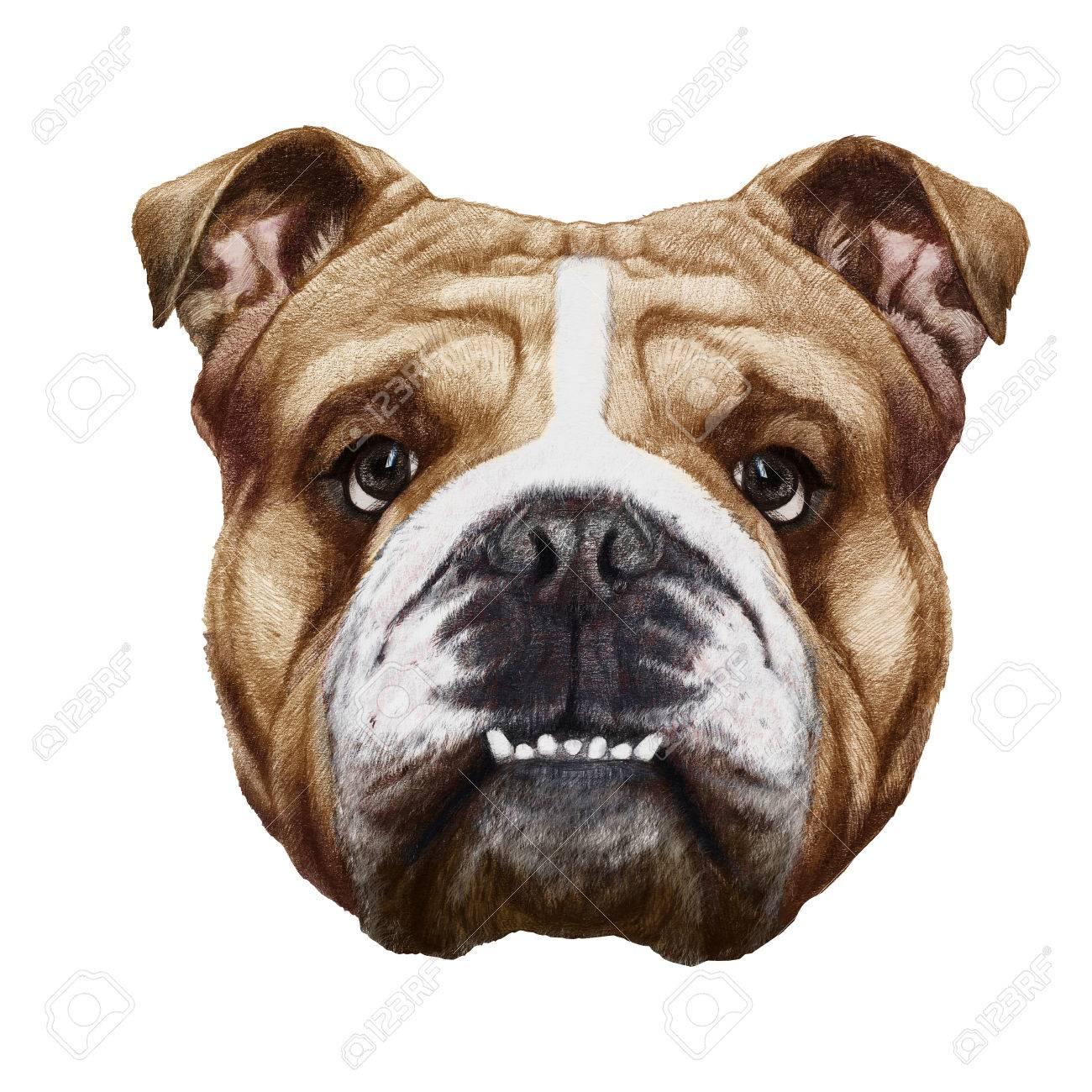 Original Drawing Of English Bulldog Isolated On White Background