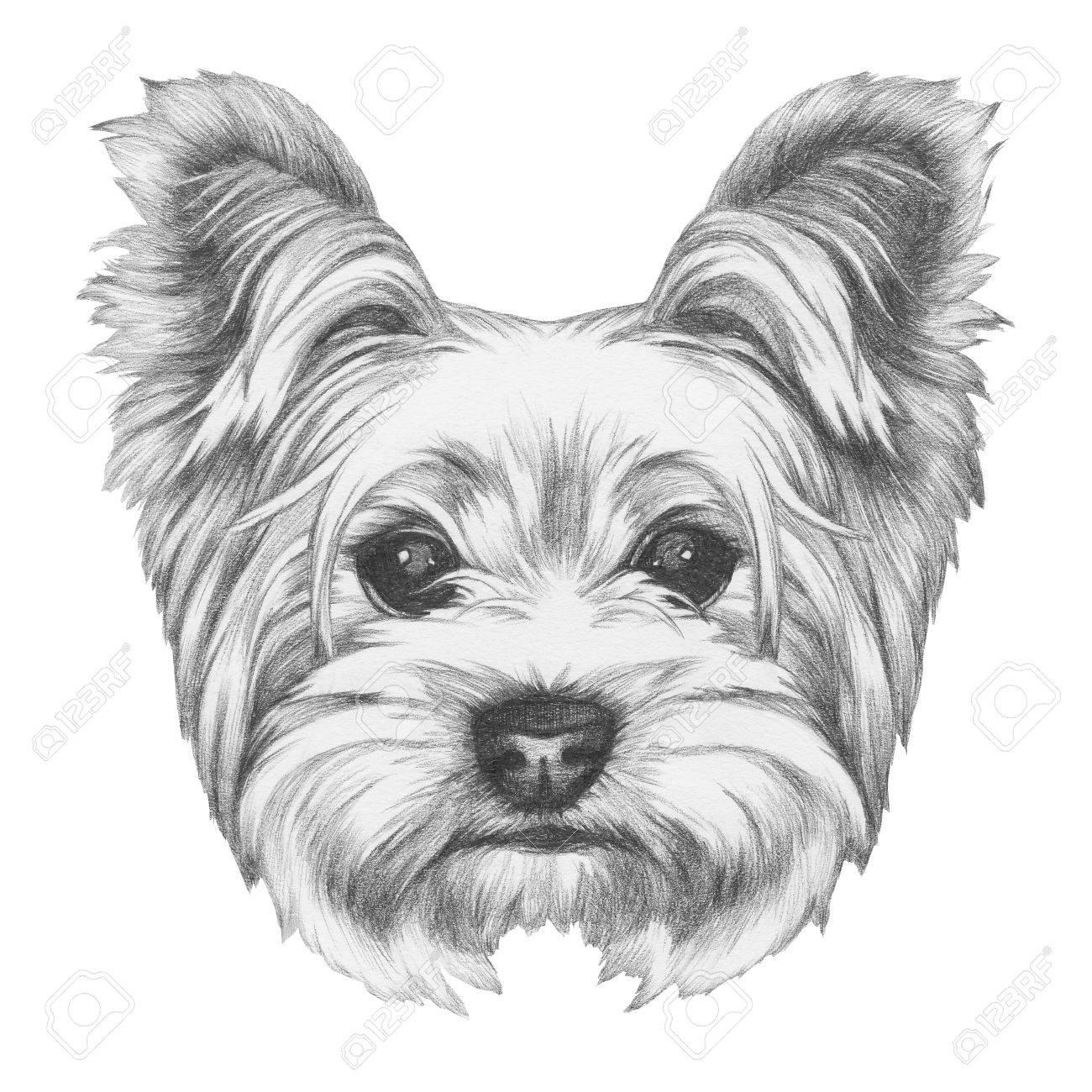 Portrait Of Yorkshire Terrier Dog Hand Drawn Illustration Stock