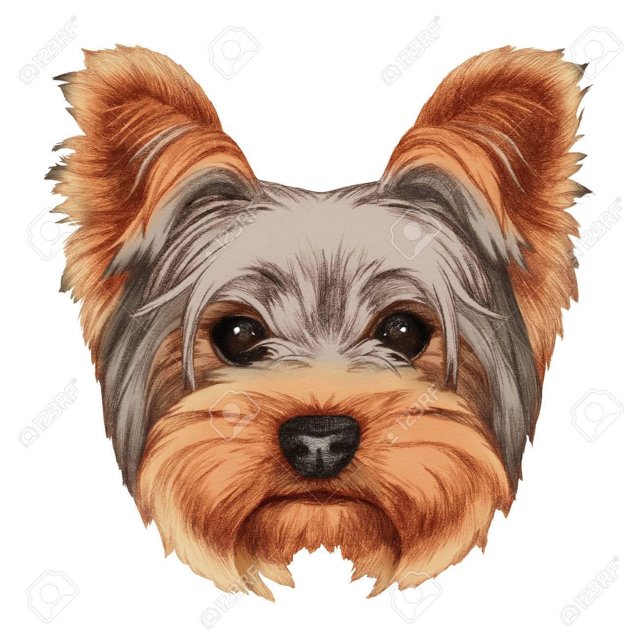 Portrait Of Yorkshire Terrier Dog Hand Drawn Illustration